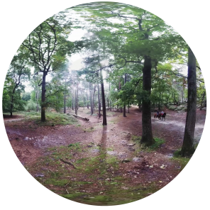 360-foret